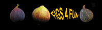 Figs 4 Fun Website